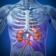 Human Body Atlas - The Handiest Human Anatomy Atlas for Organ Anatomy & Skeleton Anatomy and Muscular Anatomy!