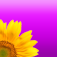 Flower Dictionary Icon