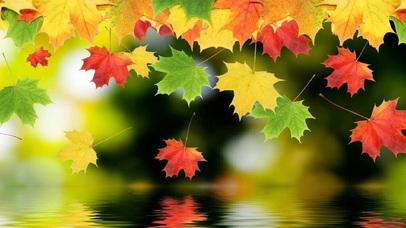 Autumn Leaves 3d Hd Wallpaper Background Autumn Puzzles