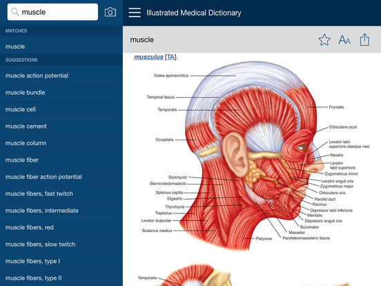 Dorland's Illustrated Medical Dictionary, Elsevier IPA